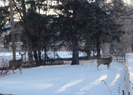 paseo.winterdeer